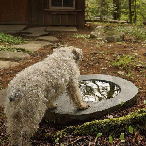 Sydney looks at ripple reflection